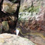 Falánk horgásztárs MOHOSZ Szepezdfürdői Horgásztanya