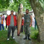 2010 07. 26. 50000 gr. MOHOSZ Szepezdfürdői Horgásztanyán fogott harcsa