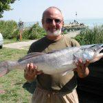 2003 09. 16. 4650 gr. MOHOSZ Szepezdfürdői Horgásztanyán fogott süllő