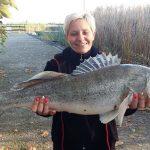 2016 10. 25. 6190 gr. 74 cm. MOHOSZ Szepezdfürdői Horgásztanyán fogott süllő