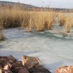 Befagyott nád MOHOSZ Szepezdfürdői Horgásztanya