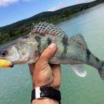 MOHOSZ Szepezdfürdői Horgásztanyán fogott kősüllő