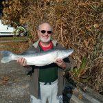 2016 10. 26. 4900 gr. 70 cm. MOHOSZ Szepezdfürdői Horgásztanyán fogott süllő