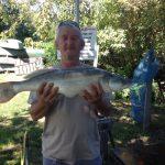 2016 08. 26. 5050 gr. 76 cm. MOHOSZ Szepezdfürdői Horgásztanyán fogott süllő